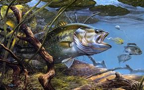 Картинка листья, вода, водоросли, природа, река, рисунок, рыбалка, дно, рыба, картина, арт, живопись, подводный мир, под …
