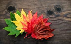 Картинка осень, листья, colorful, клен, wood, autumn, leaves, maple