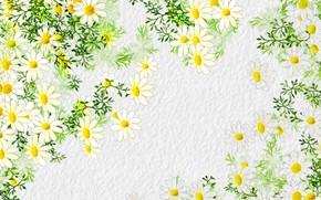 Картинка цветы, фон, ромашки, лепестки