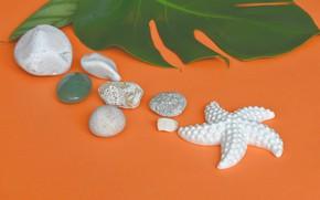 Картинка камни, фон, Лист, морская звезда