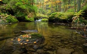 Картинка лес, Чехия, речка