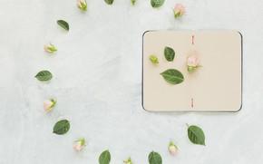 Картинка фон, розы, блокнот, розовые, бутоны