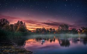 Обои закат, озеро, птица, вечер, лебедь, звёздное небо