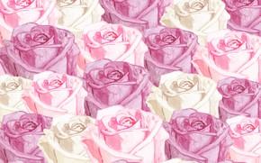 Картинка фон, розы, текстура, розовые, rose, бутоны, flower