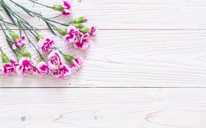 Картинка фон, розовый, букет, гвоздики