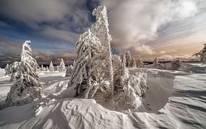 Картинка зима, иней, лес, небо, облака, снег, природа, в снегу, даль, ели, мороз, сугробы, ёлочки, заснеженный