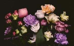 Картинка цветы, розы, colorful, черный фон, black, flowers, background, roses, гвоздики