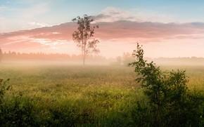 Картинка поле, лес, лето, небо, трава, облака, пейзаж, ветки, природа, туман, дерево, рассвет, листва, утро, простор, …