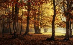 Картинка осень, лес, туман, парк, листва, краски осени, золотая осень, багрянец