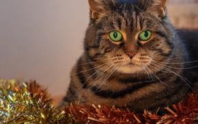 Картинка кот, праздник, новый год, портрет, мишура