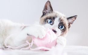Картинка кот, клубок, котенок, нитки