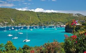 Картинка море, цветы, яхты, Карибы, Гренада