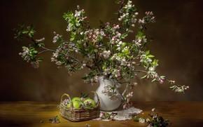 Картинка ветки, яблоки, букет, яблоня