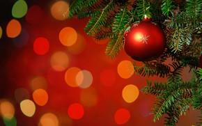 Картинка ветки, красный, блики, фон, праздник, игрушка, шар, Рождество, Новый год, ёлка, боке