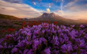 Обои поле, небо, цветы, холмы, Doug Shearer