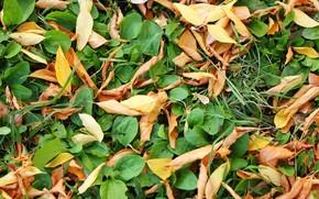 Картинка осень, листья, травка