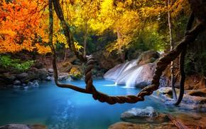 Картинка лес, листья, деревья, ветки, тропики, ручей, камни, водопад, джунгли, Таиланд, жёлтые