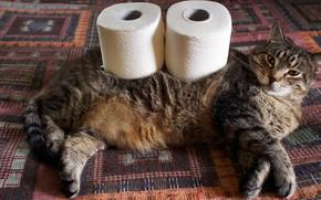 Картинка кошка, кот, взгляд, серый, кровать, покрывало, лежит, полосатый, толстый, рулоны, упитанный, туалетная бумага