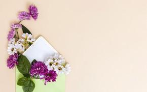 Картинка цветы, конверт, открытка, шаблон, заготовка