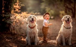 Обои собаки, настроение, мальчик, ребёнок, две собаки