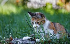 Картинка кошка, трава, взгляд, морда, природа, поза, камень, лежит, боке, пятнистая, пестрая