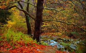 Картинка Осень, Деревья, Лес, Fall, Речка, Autumn, River, Forest, Tees