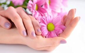 Картинка цветы, руки, маникюр