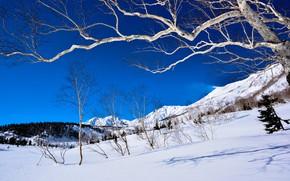Картинка зима, лес, небо, свет, снег, деревья, горы, ветки, природа, синева, дерево, склоны, вершины, вид, склон, …