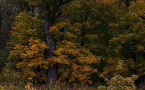 Картинка осень, трава, деревья, природа