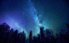 Картинка Небо, Ночь, Млечный Путь, Тайга, Созвездия