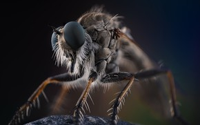 Картинка макро, природа, насекомое