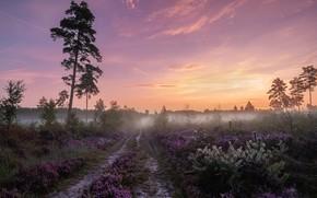 Картинка дорога, лето, закат, дерево
