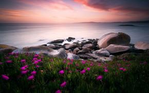 Картинка море, зелень, небо, листья, облака, цветы, камни, берег, яркие, розовые, Испания