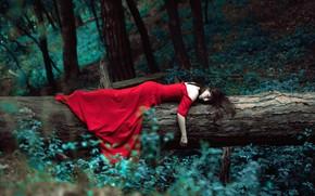 Обои лес, девушка, дерево