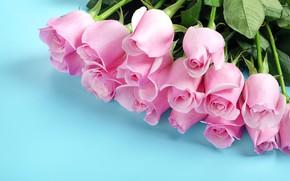 Картинка цветы, розы, букет, розовые бутоны