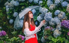 Картинка девушка, цветы, зонт, азиатка, милашка