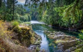 Картинка зелень, лес, солнце, деревья, река, Канада, Cowichan River