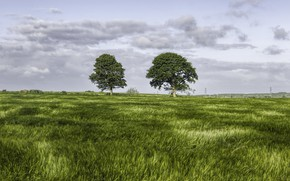 Картинка поле, лето, деревья