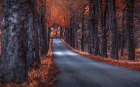 Картинка дорога, осень, деревья