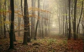 Картинка осень, лес, туман, фото