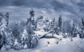Картинка зима, лес, снег, деревья, скала, сугробы, Россия, монохром, Сергей Межин