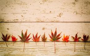 Картинка осень, листья, доски, клен
