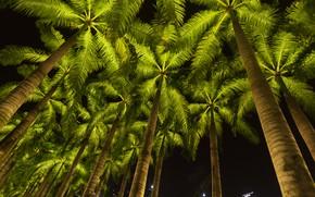 Картинка пляж, небо, ночь, пальмы, beach, sky, крона, palms, tropical