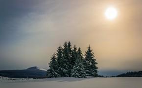 Картинка зима, лес, небо, солнце, снег, горы, ели