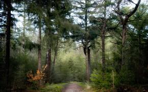 Картинка дорога, лес, природа