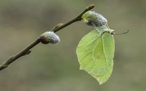 Картинка фон, бабочка, лимонница