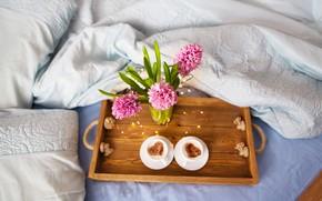 Картинка цветы, капучино, гиацинты