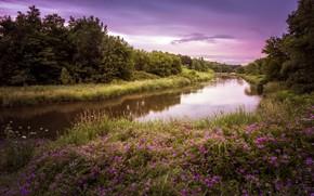 Картинка лето, природа, река