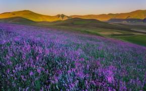 Картинка цветы, холм, луг
