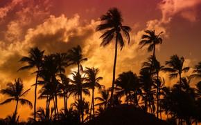 Картинка тропики, пальмы, вечер
